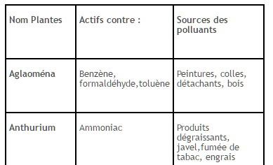 Plantes_polluantes_liste_J-Bruffin