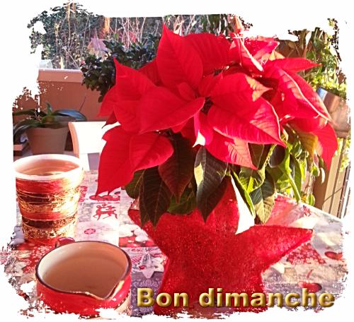 Poinsettia dimanche