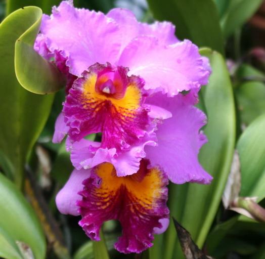 quels soins pour votre orchid e le pouvoir des fleurs. Black Bedroom Furniture Sets. Home Design Ideas