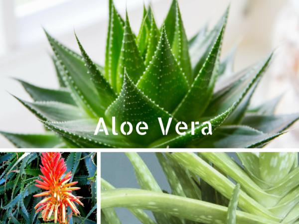 Vid o 5 plantes pour votre chambre coucher le pouvoir des fleurs - Plante verte chambre a coucher ...
