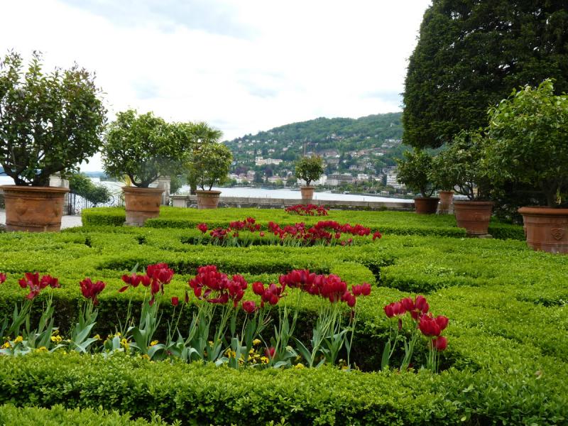 Fleurs des îles Borromées_22