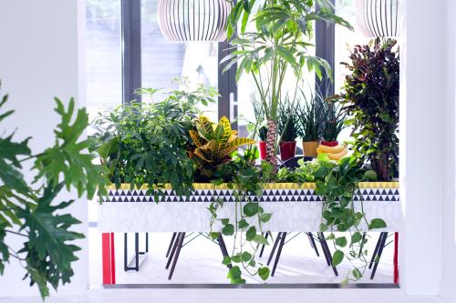 Plantes pour Homme_00