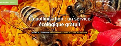 Pollinisation futura-sciences_sommaire