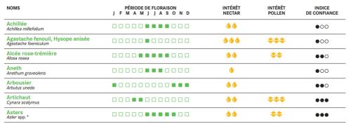 Plantes méllifères_annuelles liste