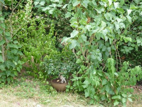 Plante extérieur