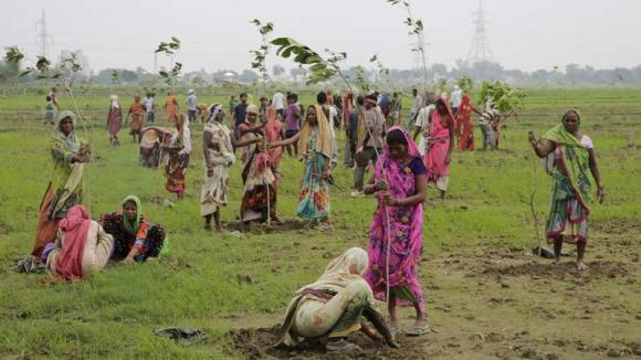 Inde-arbres_01