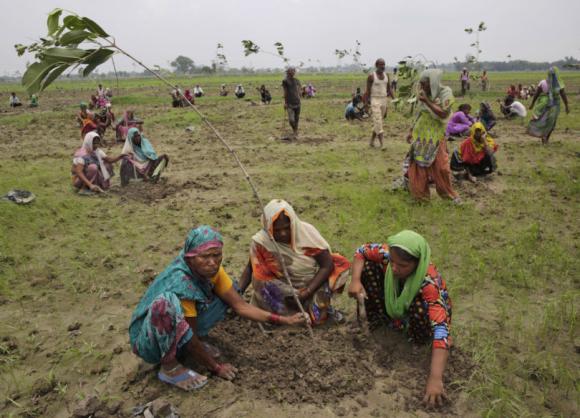 Inde-arbres_02
