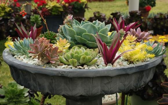 planter des succulentes excellent boutures de plantes grasses varies en pot en ppinire sous. Black Bedroom Furniture Sets. Home Design Ideas