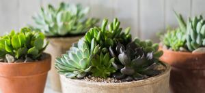 Succulentes_01