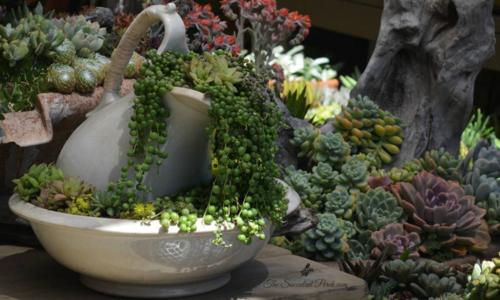 Succulente-perch