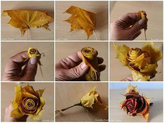 Feuille rose automne_01