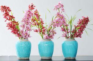Orchidée Cymbidium_10