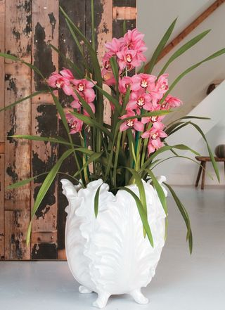 Orchidée cymbidium plante