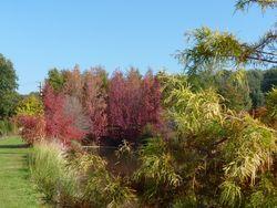 Jardin du bois marquis C peyron -01