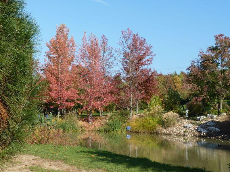 Jardin du bois marquis C peyron -05