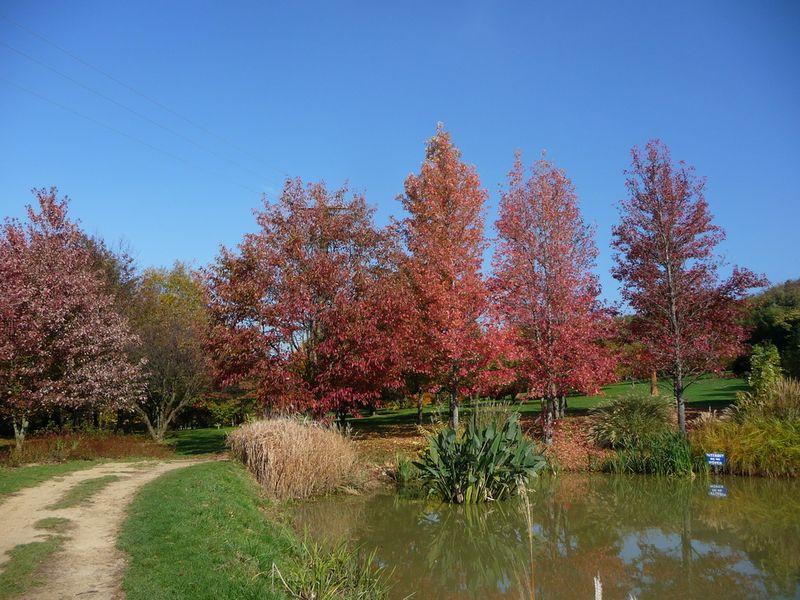 Jardin du bois marquis C peyron -06