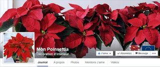 Poinsettia page FB