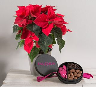 Interflora poinsettia avec chocolat