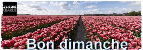 Dimanche tulipes