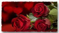 Roses rouges coupées