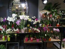 Poizat fleurs