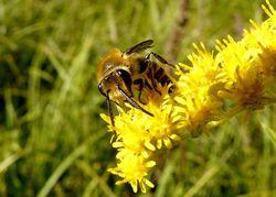Pollinisation photo Patrick Straub _ 01