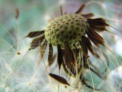 Pollinisation photoJmdesfilhes,CC by-sa 2.5