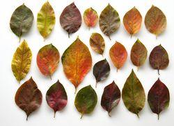 Feuilles d'automne 2