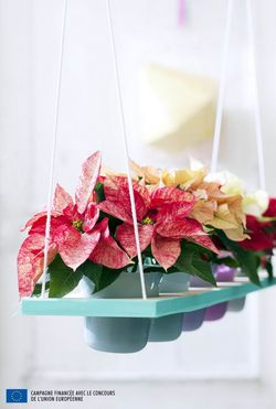 le pouvoir des fleurs plantes. Black Bedroom Furniture Sets. Home Design Ideas