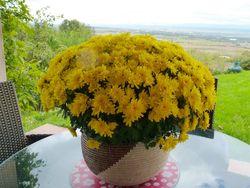 Chrysantheme deco_05
