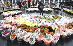 6000 chrysanthèmes
