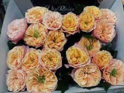 Rose Safrano