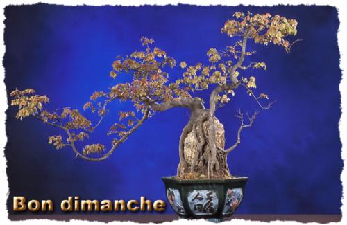 Dimanche bonsai