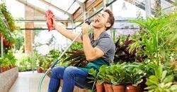 Plante chanteur
