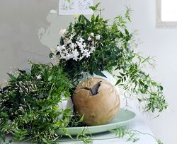 OHF plantes blanches Jasmin