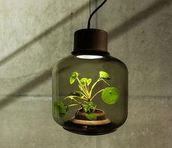 Lampe plantes 04