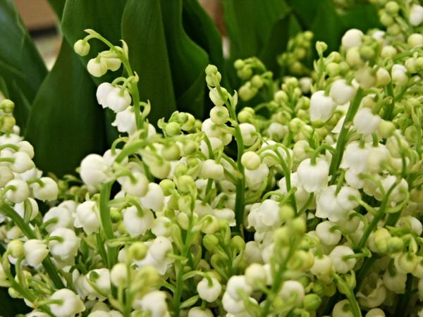 n 39 oubliez pas dimanche d 39 offrir du muguet le pouvoir des fleurs. Black Bedroom Furniture Sets. Home Design Ideas