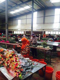 Oeillets Ethiopie 2