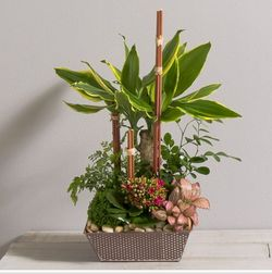 Interflora mikado, assortiment plantes