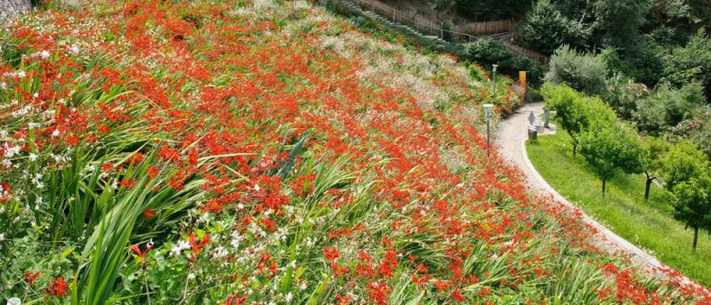 Jardin Italie SUN 2