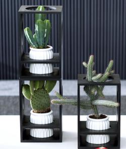 Cactus _03
