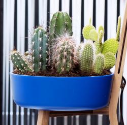 Cactus _06