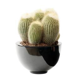 Cactus _02