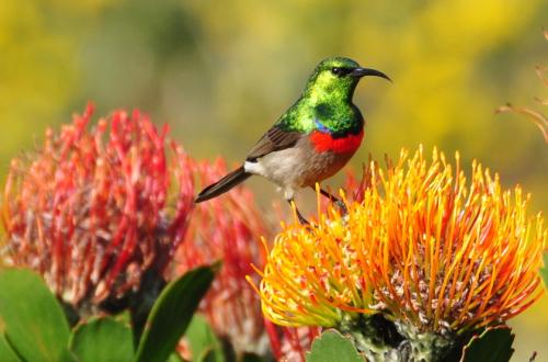 Kirstenbosch_2