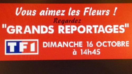 Fleurs TF1