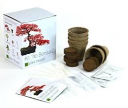 Kit bonsaï détail