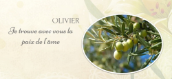 Langage olivier