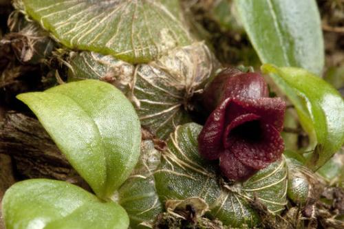 Nouvelle_plante_orchidée