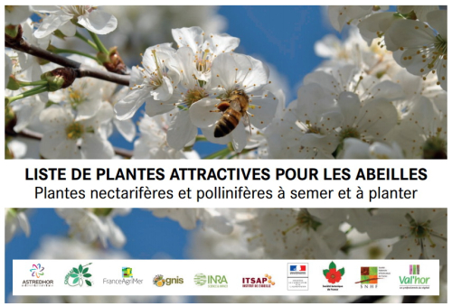 Plantes méllifères_00