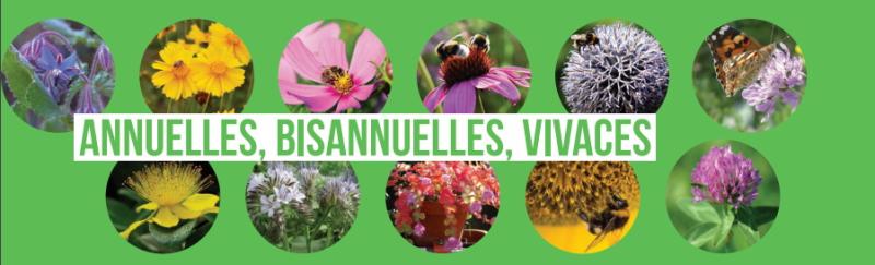 Plantes méllifères_annuelles